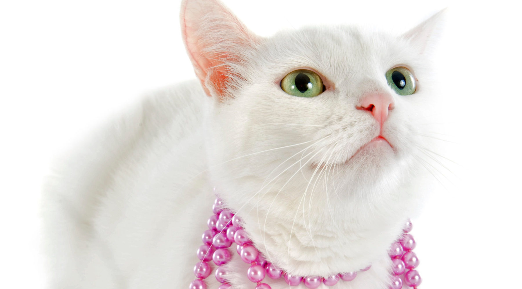 a cat wearing a necklace