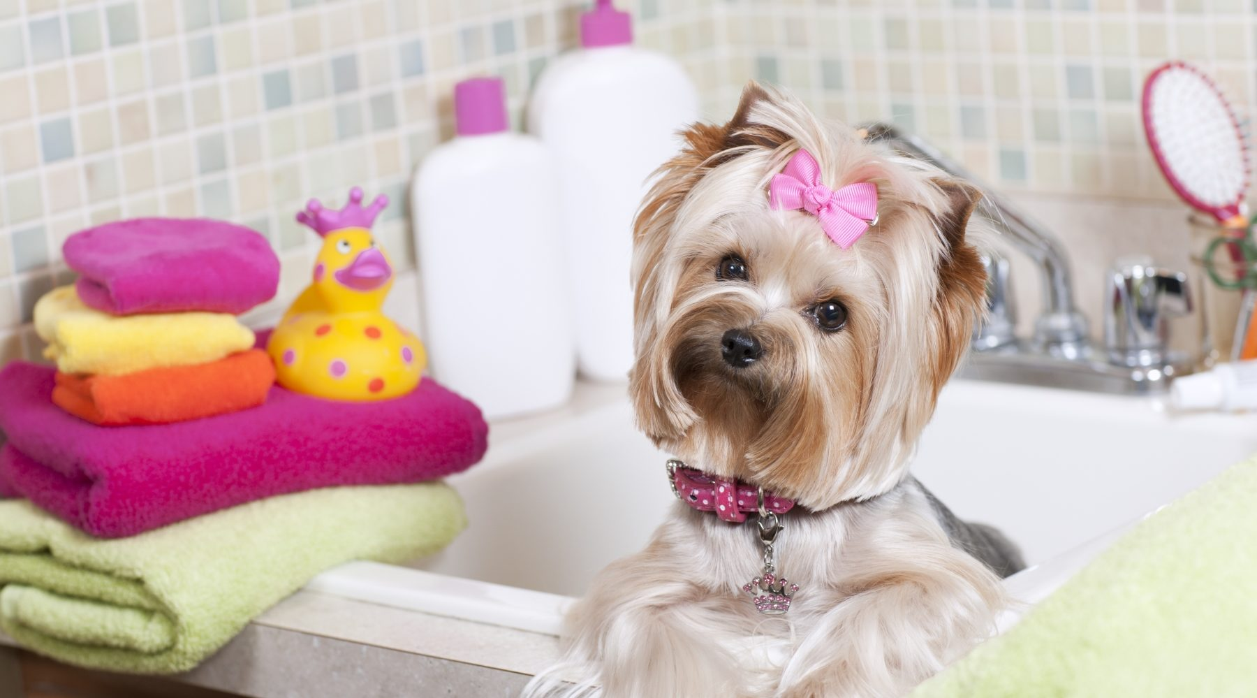 dog in a bath at the groomers