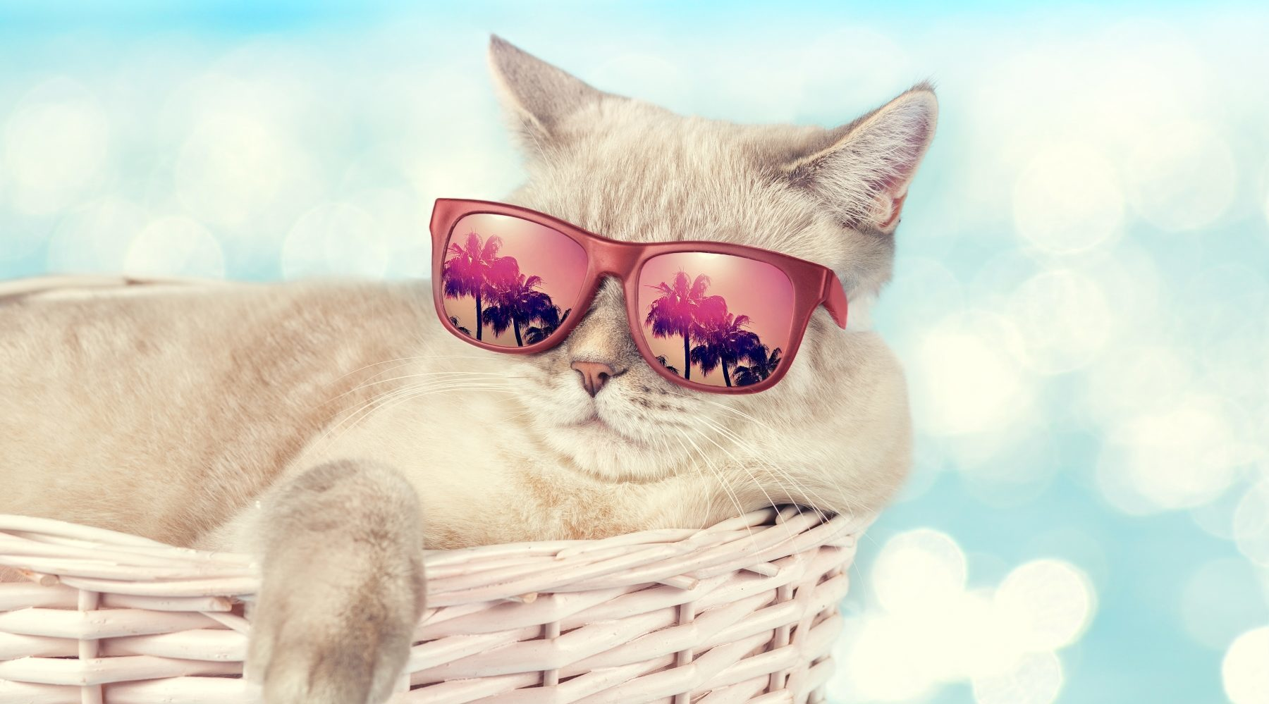 cat in a basket with sunglasses
