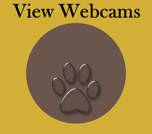 button linking to webcam site